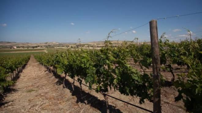 Azienda D'Uva: non solo vino