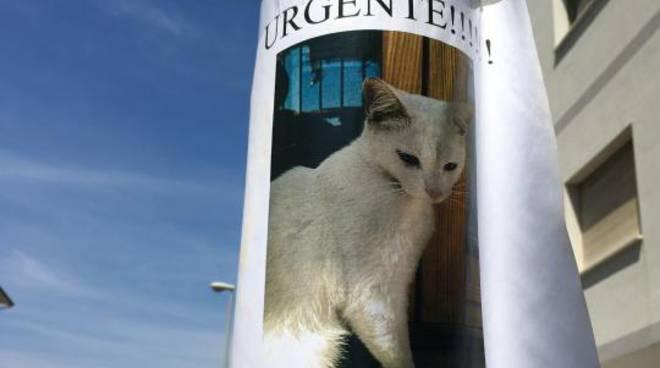 Gatto Bianco Smarrito Vicino Piazza Del Papa Appello Per Trovarlo
