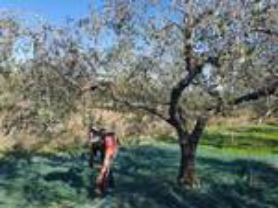 L'Oleificio di San Martino, la più antica cooperativa agricola del Molise