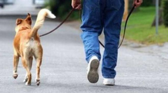 cane a spasso