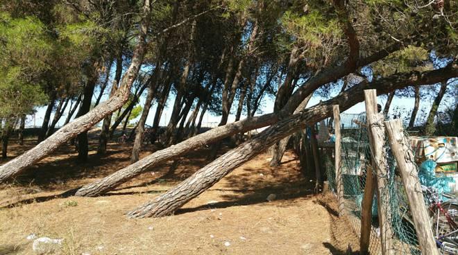 pineta-campomarino-133994