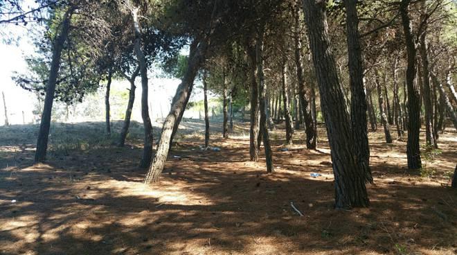 pineta-campomarino-133995