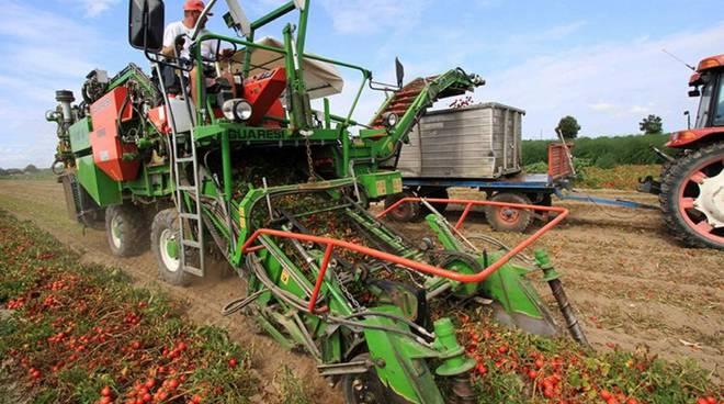 pomodori raccoglitore meccanico