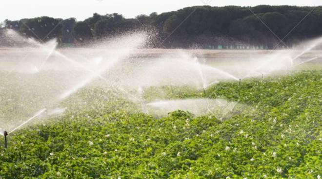 campi-irrigati-136234