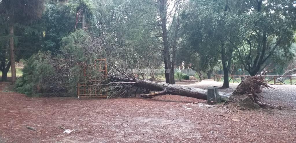 alberi-caduti-138681