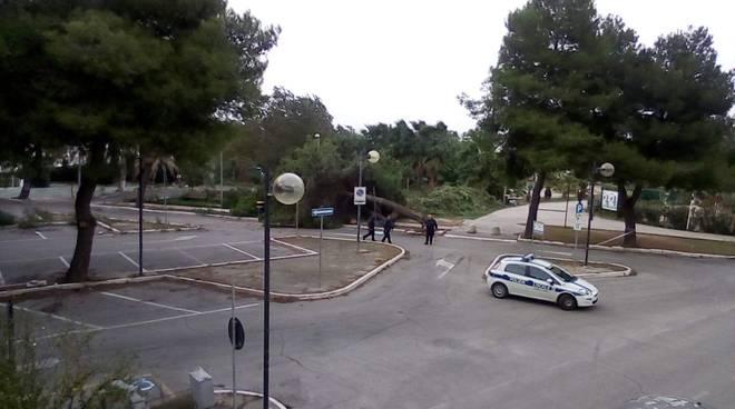 albero-caduto-rio-vivo-138908