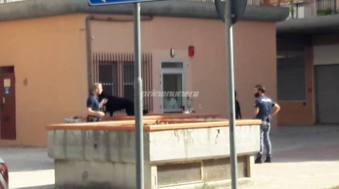 cani-antidroga-polizia-138172