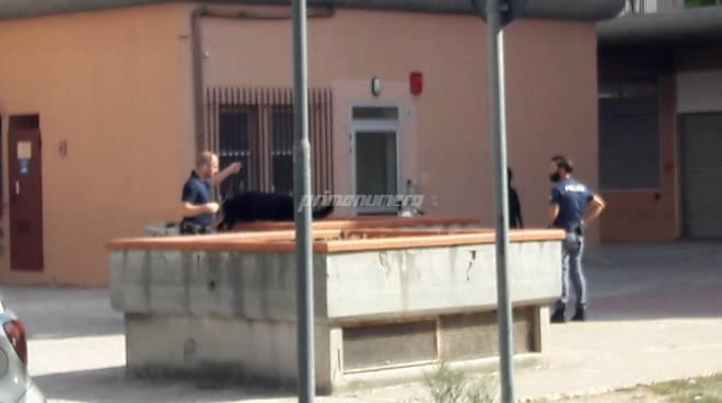 cani-antidroga-polizia-138173