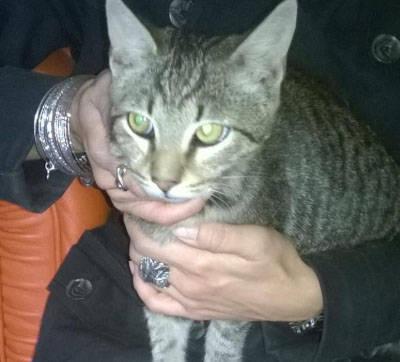 gattino-adottato-137682