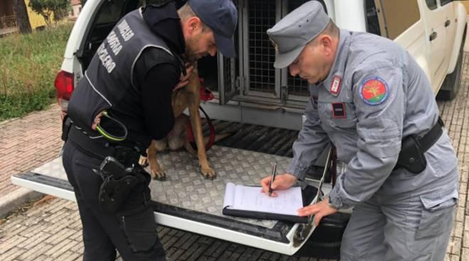 carabinieri-forestali-sepino-140466