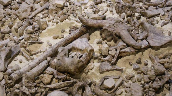 Museo Paleolitico di Isernia
