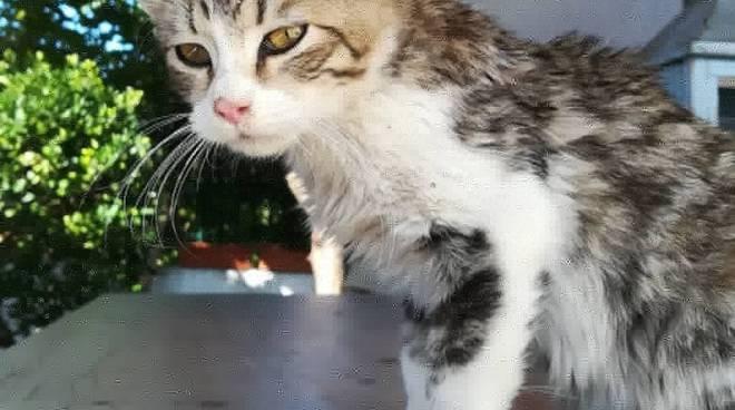 gatto-smarrito-140684