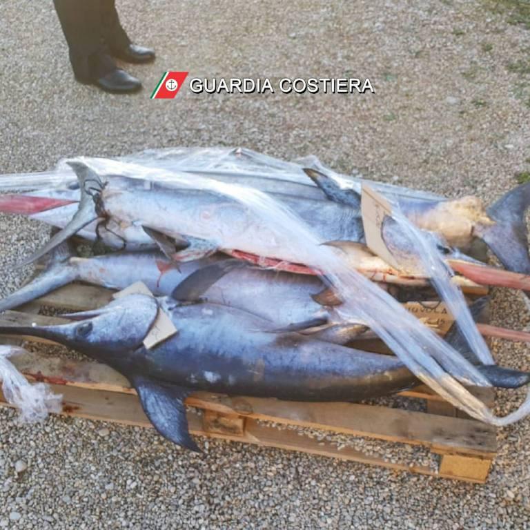 pesce-sequestrato-capitaneria-142051