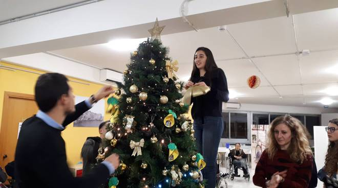 Rotaract albero