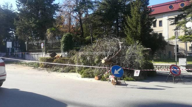 taglio alberi via petrella