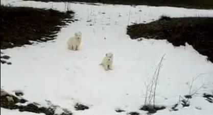 cagnolini abbandonati