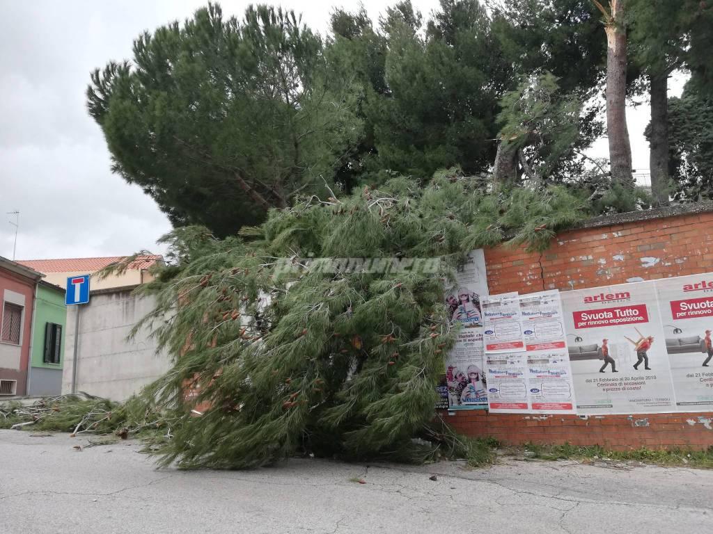 alberi-145299