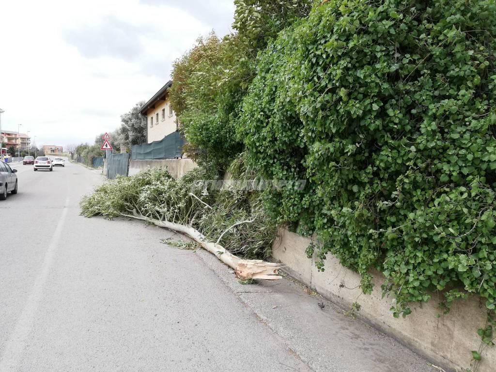 alberi-caduti-145307