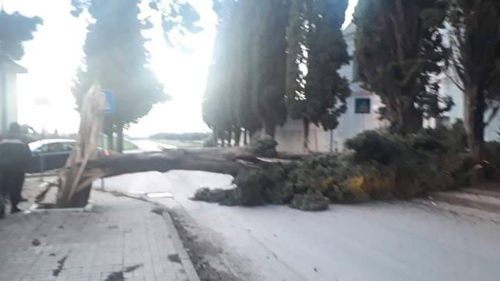 alberi-caduti-vento-145282