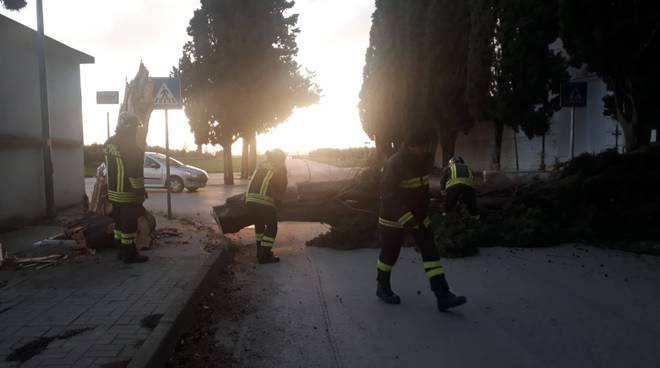 alberi-caduti-vento-145283