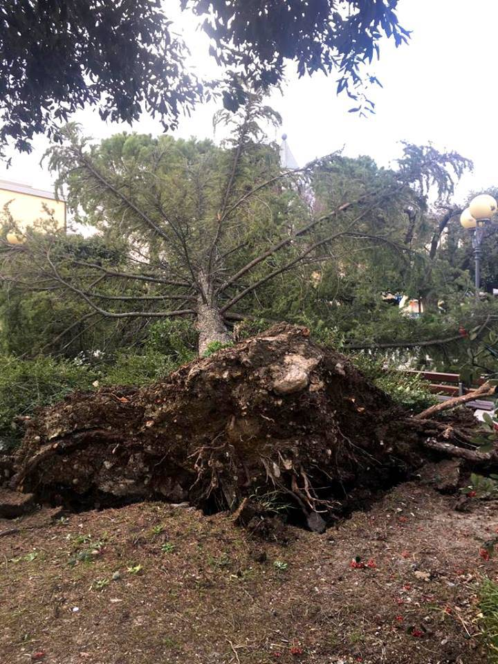 albero-caduto-vento-montenero-145292