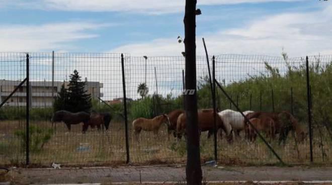 cavalli-difesa-grande-144899