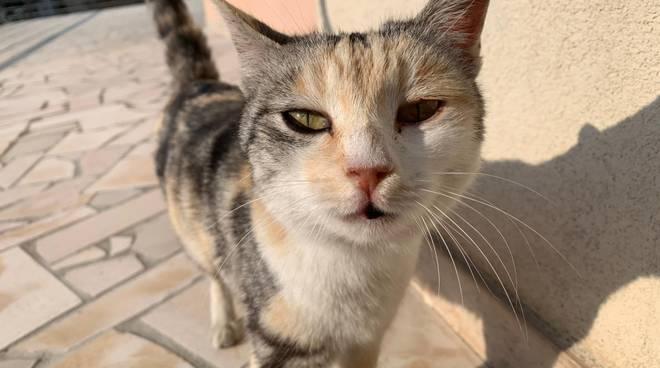 gattina-145190