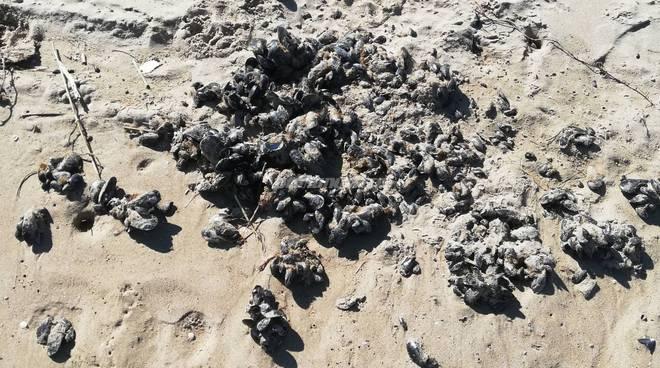 rifiuti-in-spiaggia-145551
