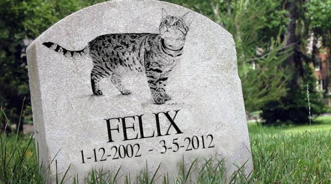 felix-cimitero-animali-146524