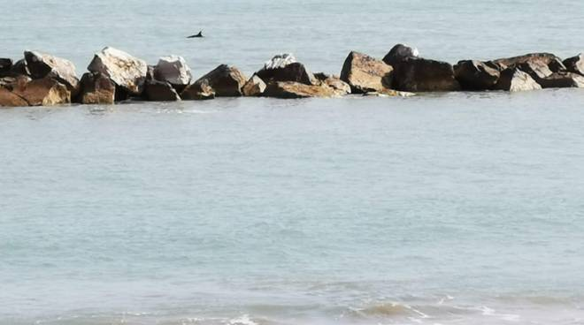 delfini-a-termoli-148630