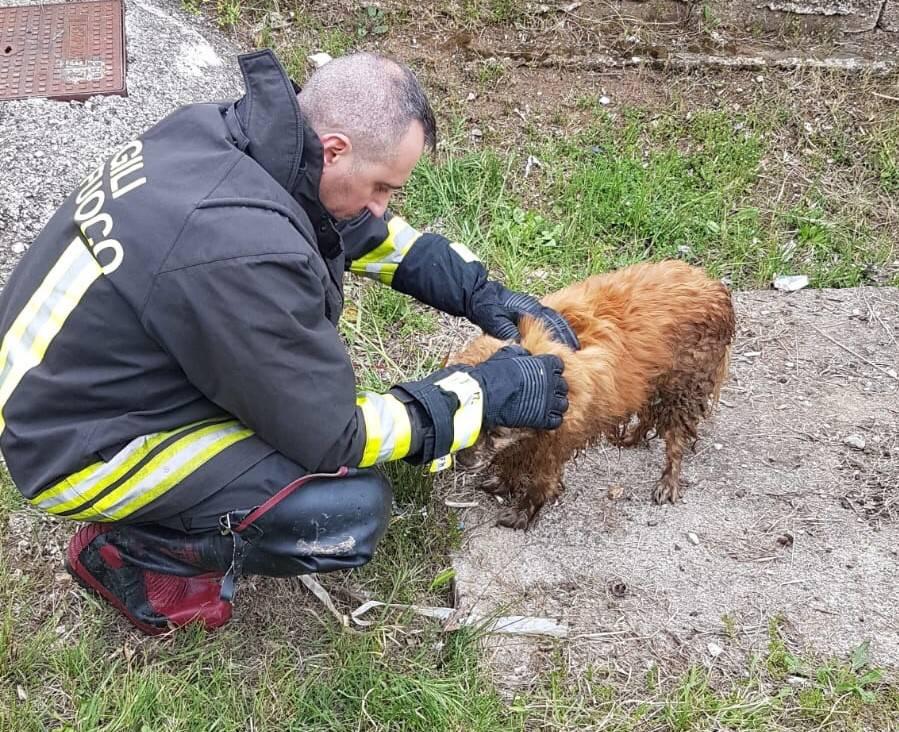 cane vigili del fuoco