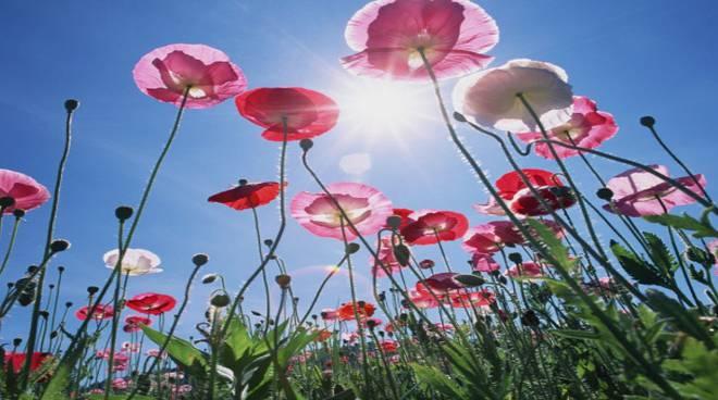 prato fiorito e fiori