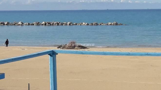 Pulizia spiagge 11 aprile 19
