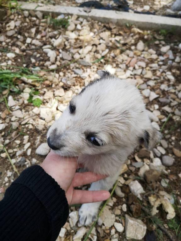 cuccioli-cercano-casa-150309