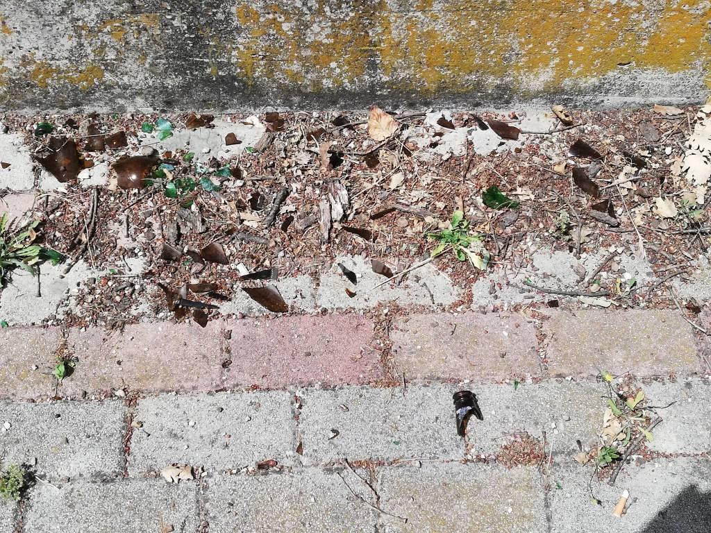 casetta-su-quercia-secolare-152267