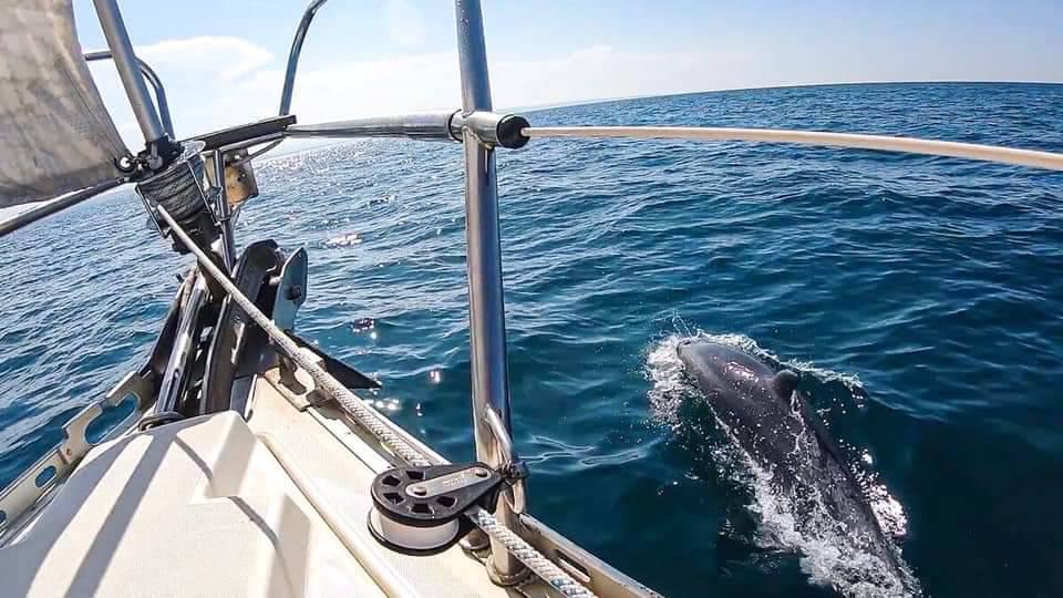 Delfini al largo di Termoli