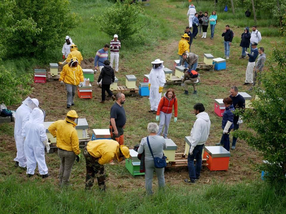apiario di comunità