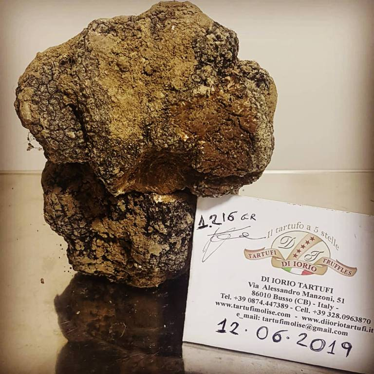tartufo-nero-152291