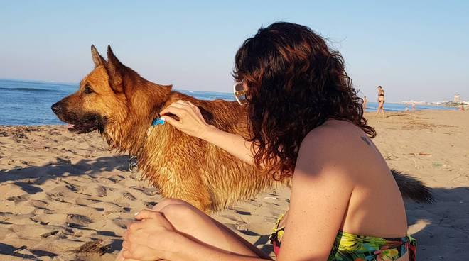 cani-spiaggia-153621