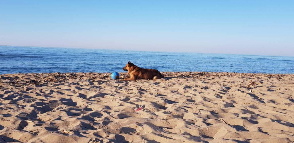cani-spiaggia-153622