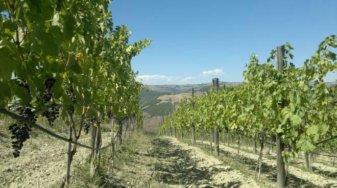 herero-vino-e-vigneto-154873
