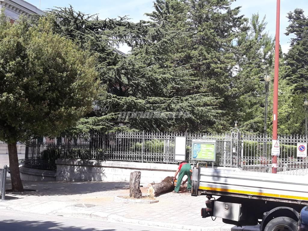 albero convitto Mario Pagano
