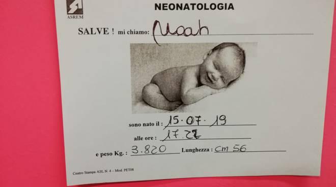 noah-154411