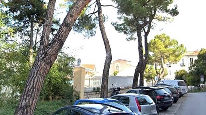 pini Campobasso