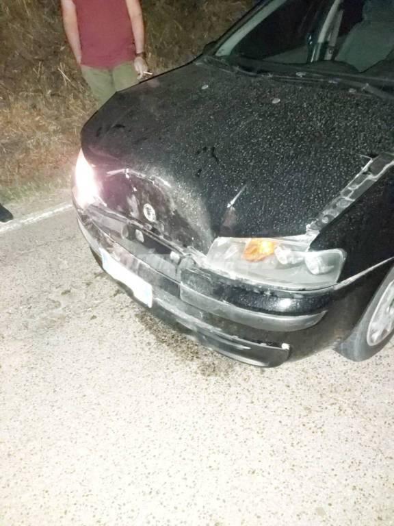 Auto distrutta da cinghiale