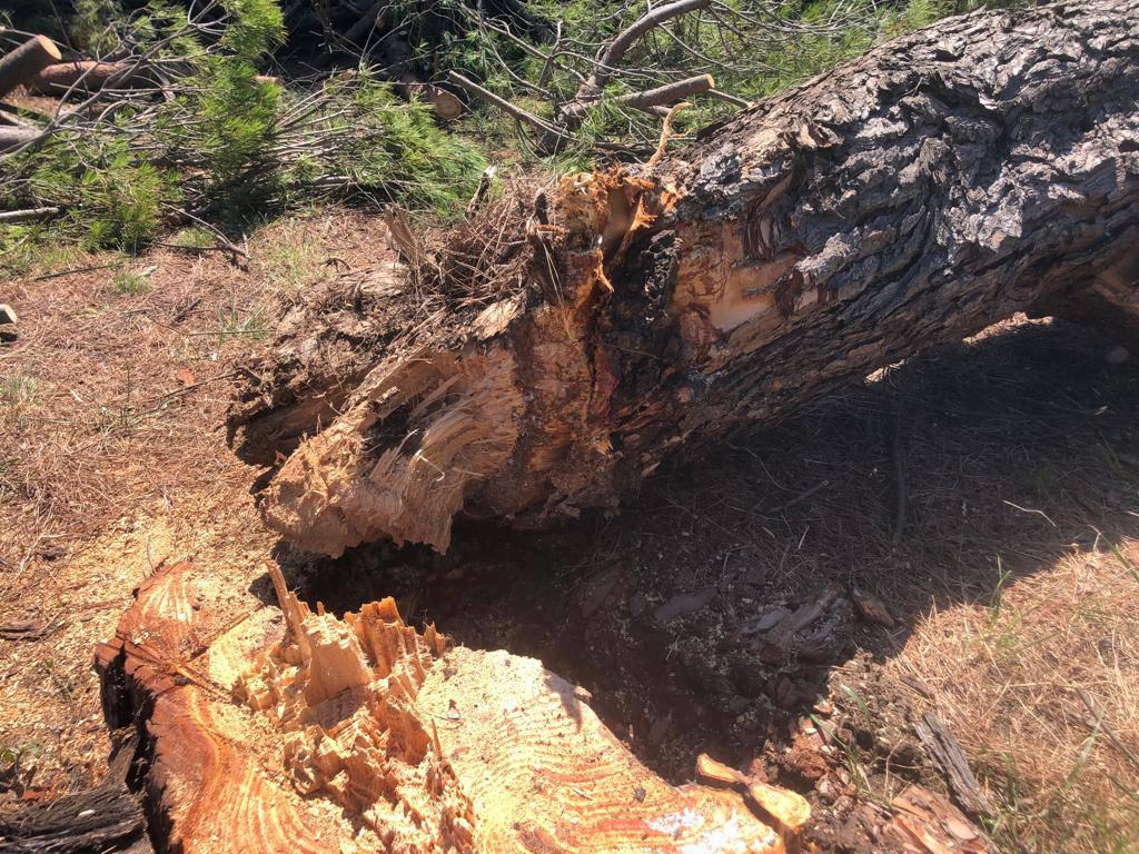 alberi-abbattuti-termoli-158567