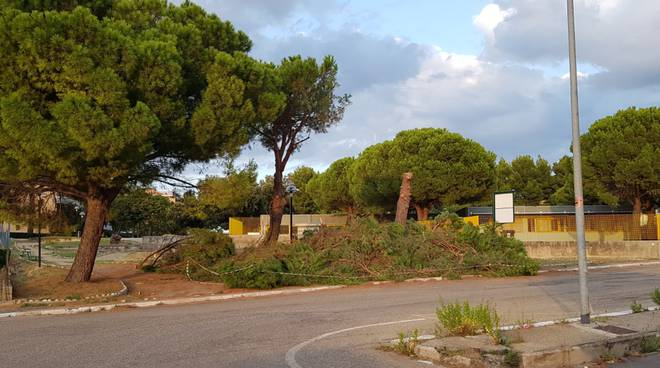 alberi-tagliati-termoli-158534