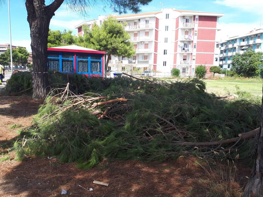 alberi-tagliati-termoli-158535