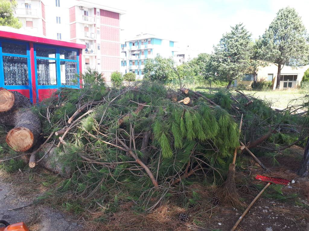 alberi-tagliati-termoli-158536