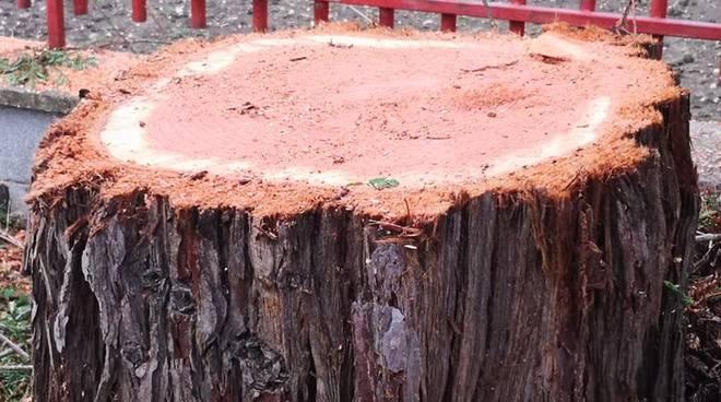 sequoia cb